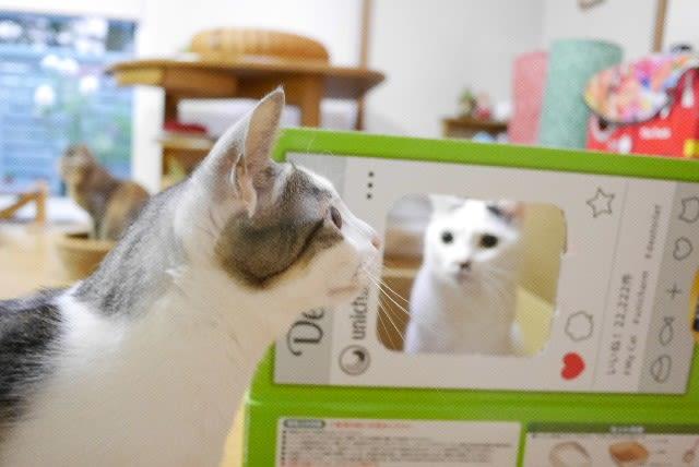 ふたつめの猫トイレ