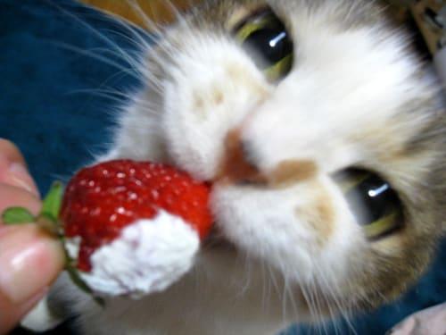 らぶイチゴ