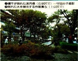 倒れた木を撤去する作業員ら