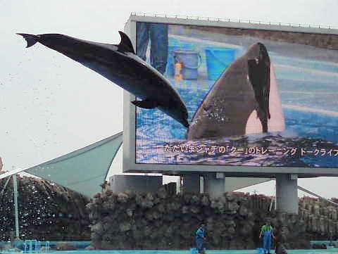 名古屋港水族館 シャチ 事故