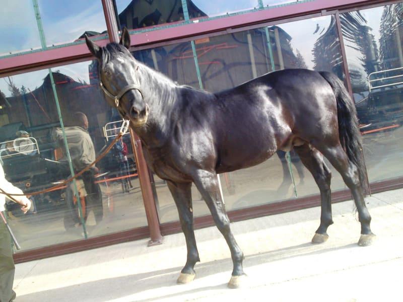 131103_horse04