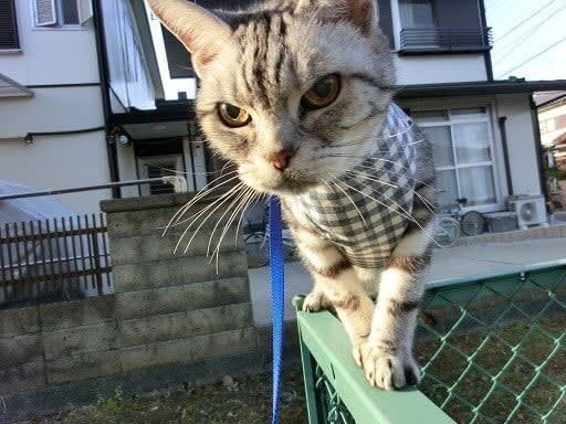 フェンスの上にひらり♪