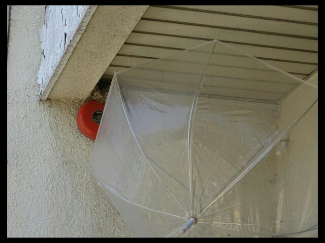 ツバメ の 巣 保護