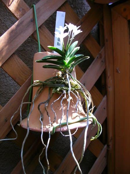 2011年7月17日のブログ記事一覧-べ蘭ダ栽培研究室