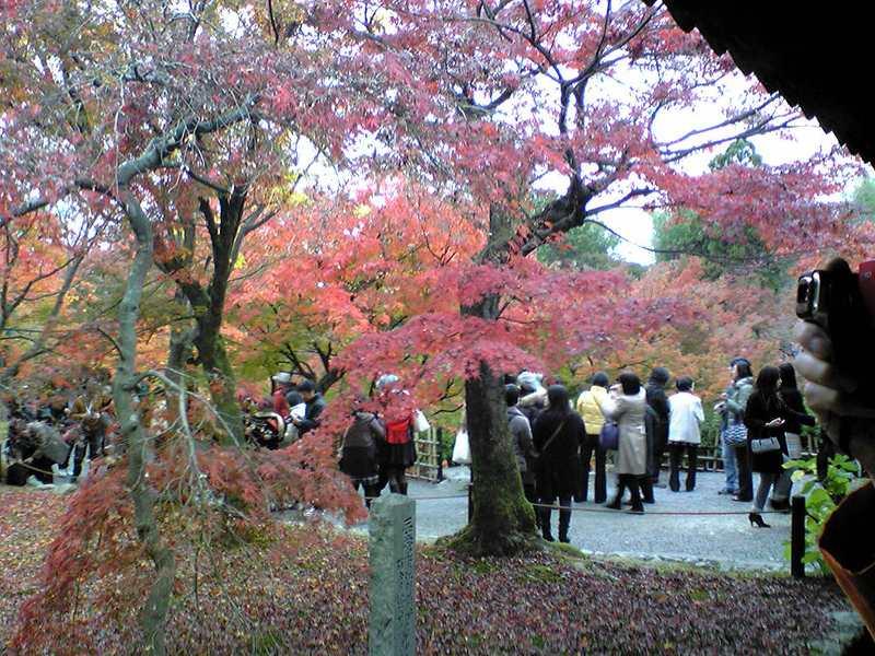 京都観光!