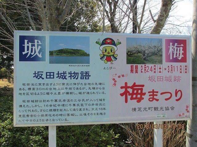 坂田城跡梅まつり2018【2018.03....
