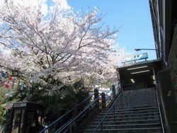 逸見駅の桜