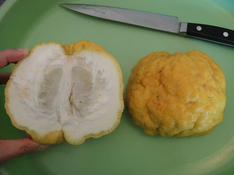 2010/12/24獅子柚子
