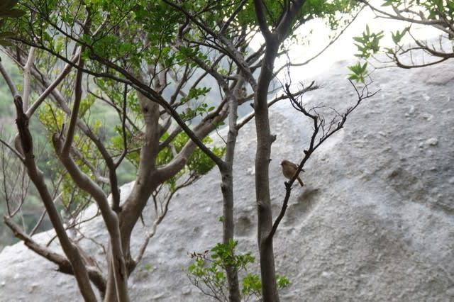 屋久島の野鳥・ジョウビタキ