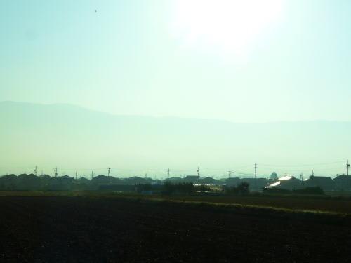 朝日に照らされ田圃の畔草が白く輝いていました