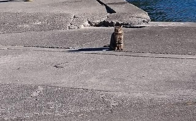 波止場の猫に挨拶