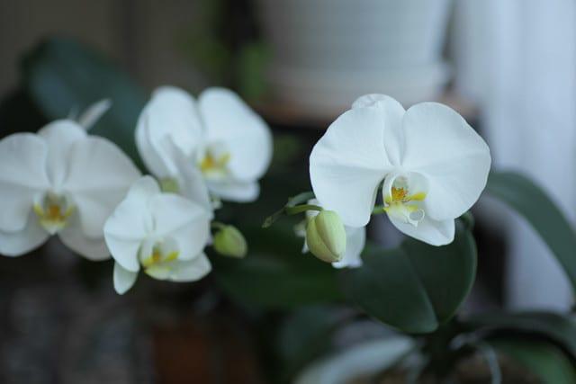 夏に咲くランの花