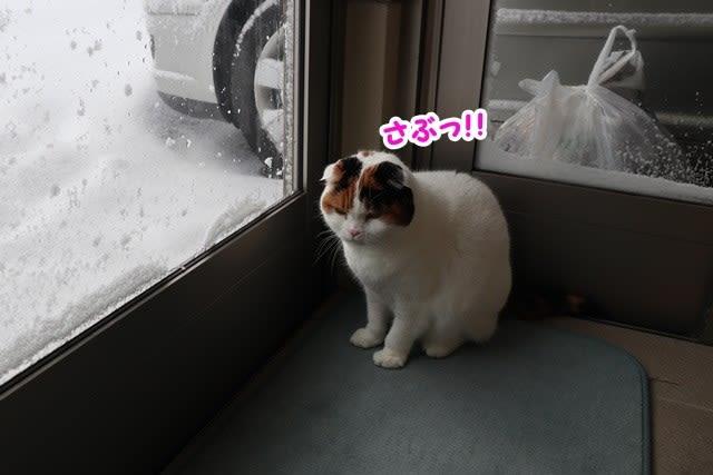 雪に埋もれています~