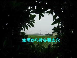★生垣の穴