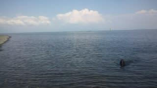 琵琶湖で泳いだ  U^  エ^U