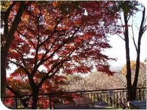 謙信平の紅葉と遠景、色ずきがもう少しあとが