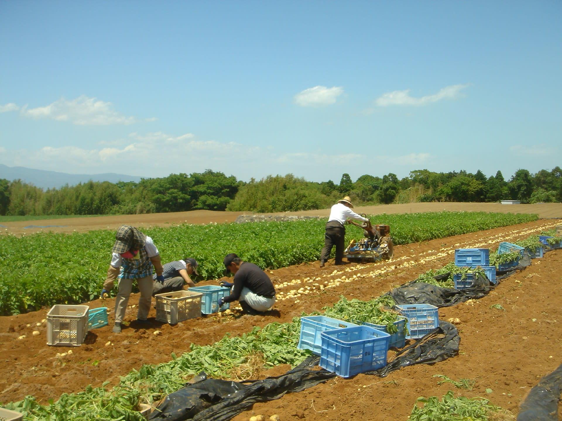 ――長崎にはジャガイモにまつわる歴史があったのですね。農業をはじめたきっかけはなんだったのでしょうか?