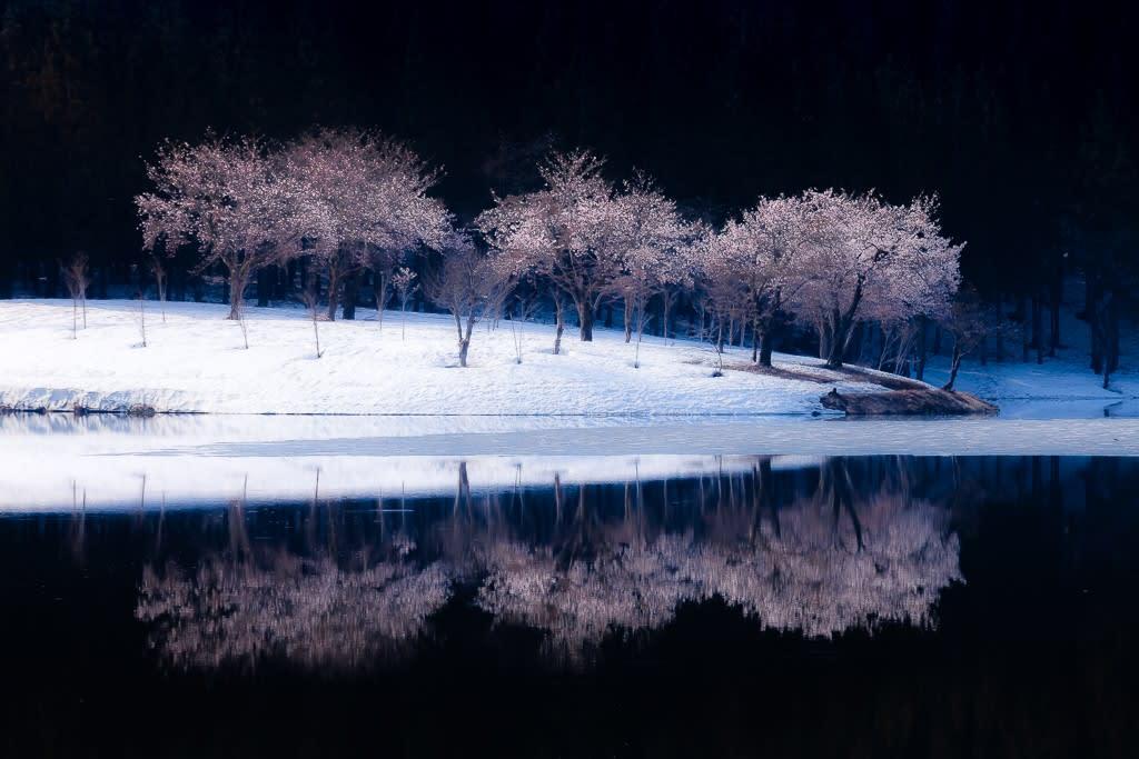 中子の桜の写真