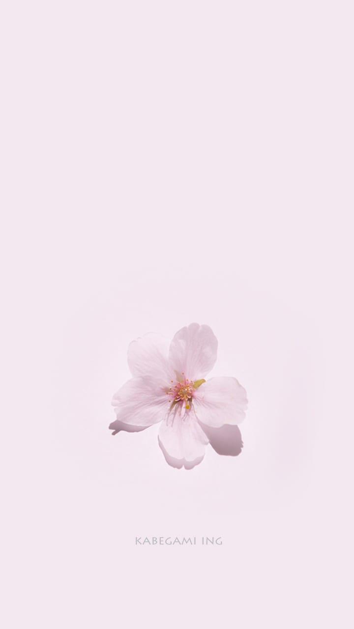 桜 スマホ壁紙 壁紙ing管理人の写真ブログ