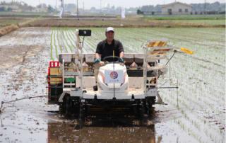 水稲新品種「だて正夢」の田植え