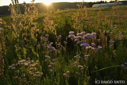 初夏の田園