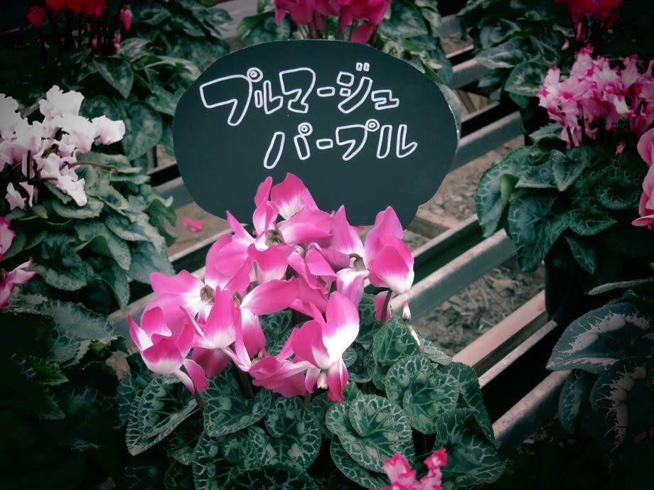 電話番号0958360190の詳細情報「三浦園芸(園芸店) …