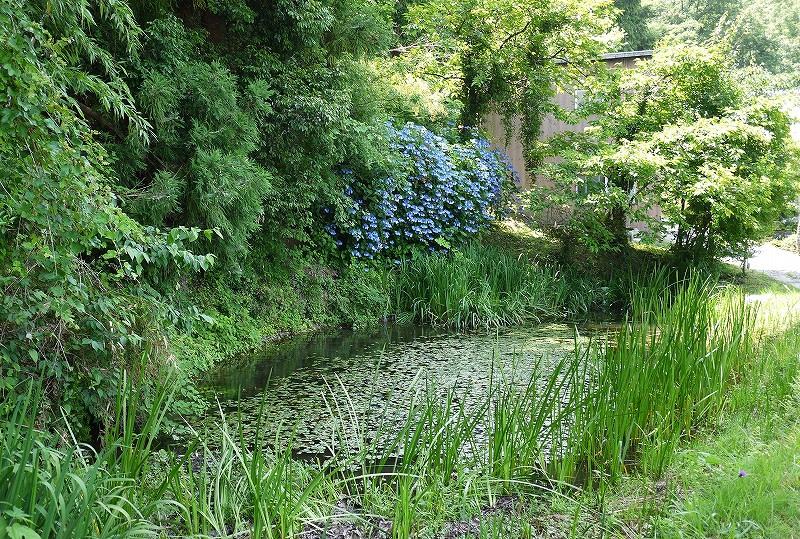 鎌倉の滝前の池