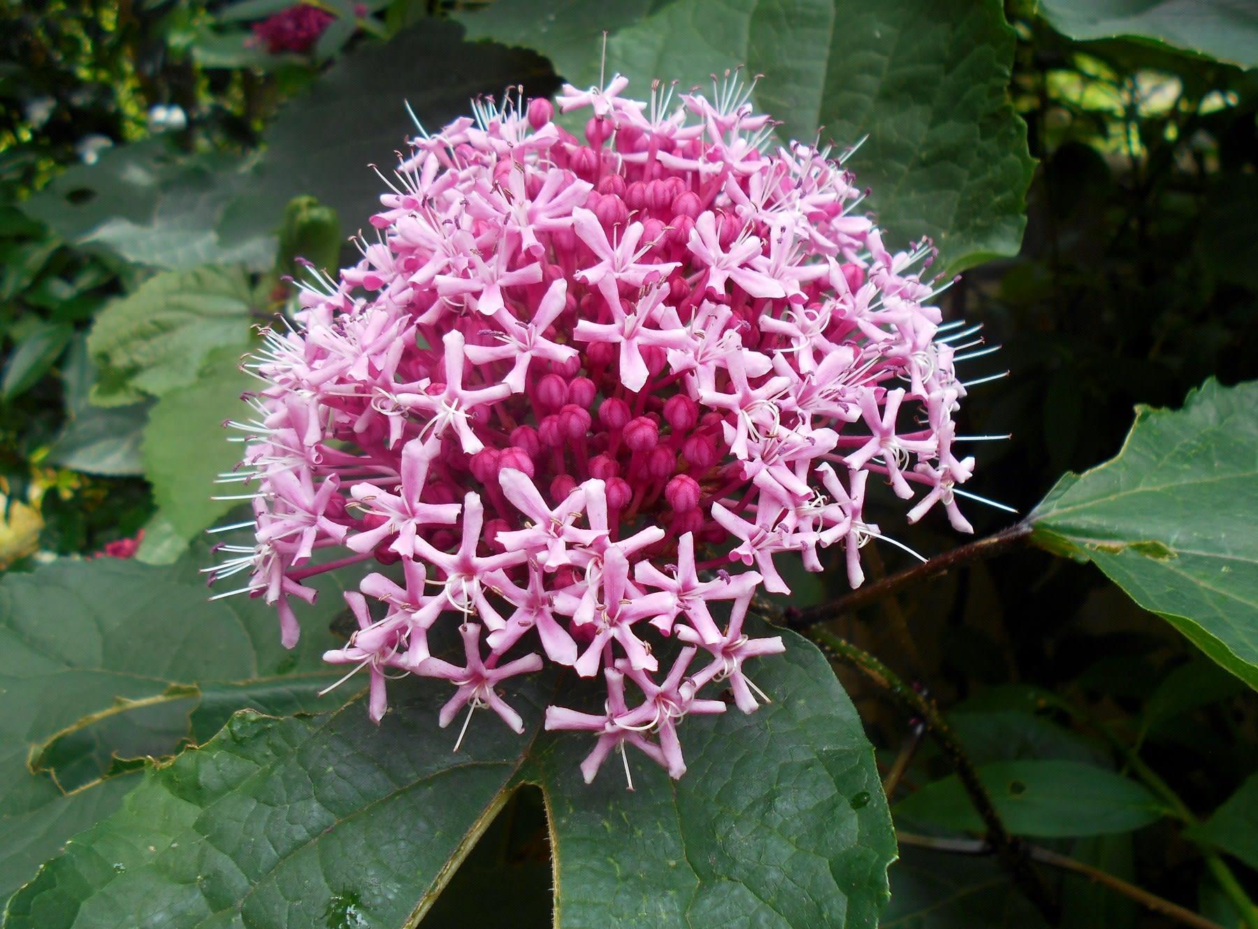 7月庭の花など 花物風景