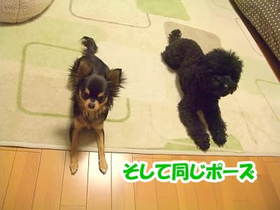 https://blogimg.goo.ne.jp/user_image/24/70/726b050fbe5b663b233be3d52fdb32de.jpg