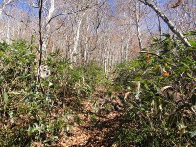ddbb96a418 登山道の脇は背丈程の笹薮。足元はぬかるんでグチャグチャ。 所々澄んだ小川のような流れがあり、湿地で御馴染みの油様の皮膜も浮いている。