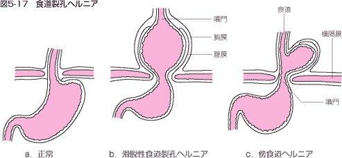 【最新】猫伝染性腹膜炎(FIP)~原因・症状(ウ …