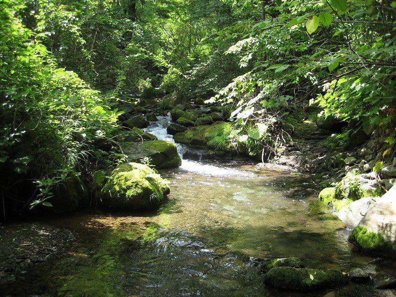 渓流IN北海道