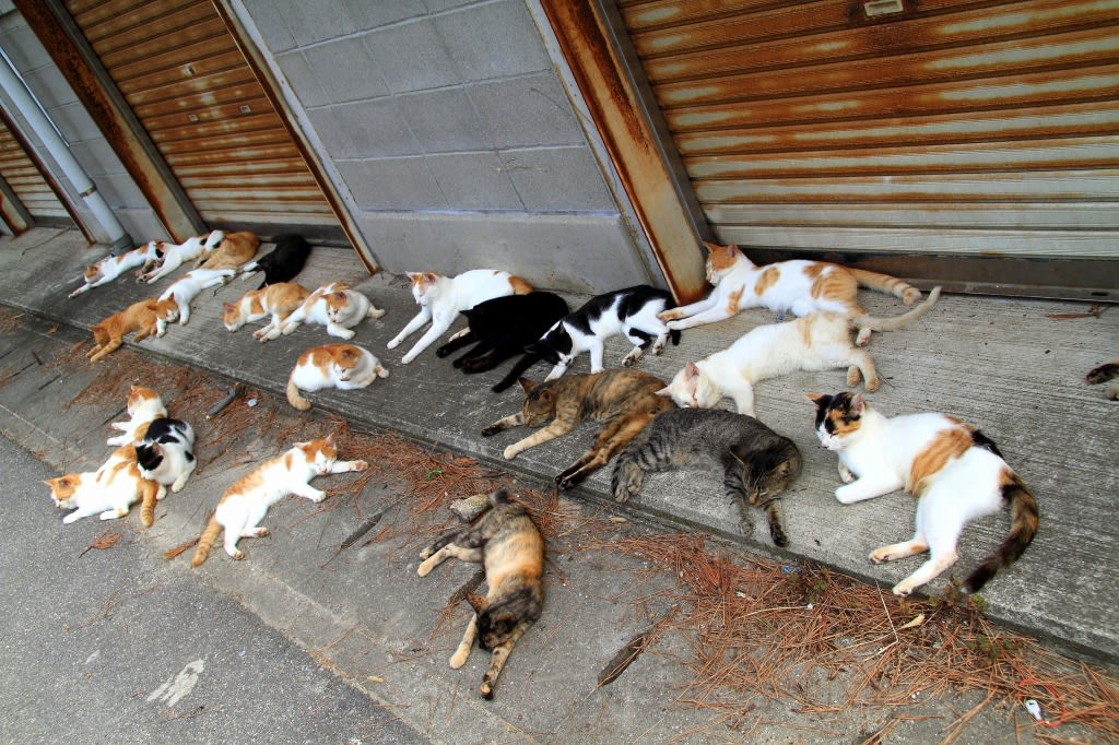 男木島の猫たち 2014年 9月 その...