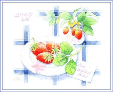 木戸農園さんのイチゴ おさんぽスケッチ にじいろアトリエ 水彩 色鉛筆イラスト スケッチ