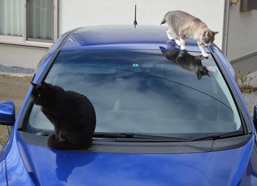 車上の2ニャンコカフェの猫イラスト2 猫のおもてなし