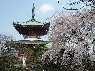 桜 さいたま