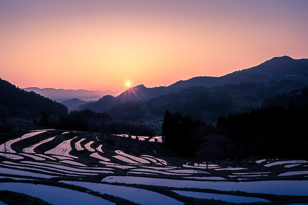 大山千枚田の夜明けの写真