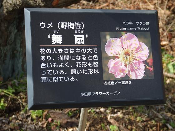 2007_0126flower0015