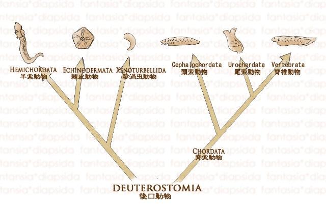 vertebrata:01 - fantasia*diap...