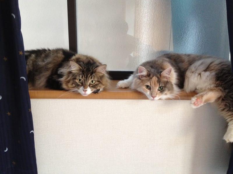 左右対称猫