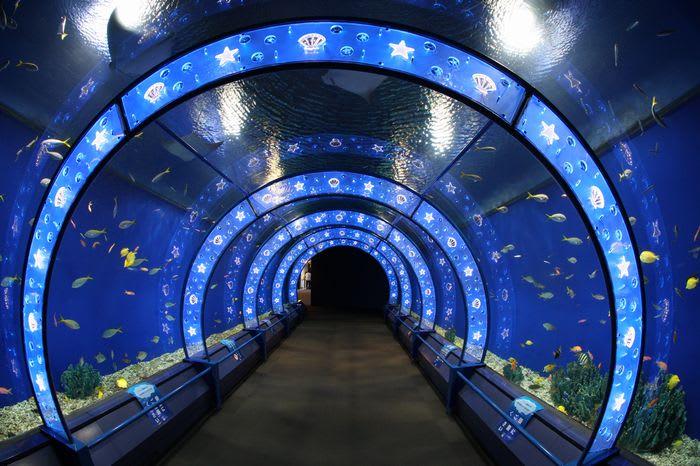 Thủy cung kaiyukan 海遊館 Thủy cung – Kaiyukan a819b1075b897fed9d4da8279356df1f