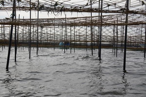 東京湾の環境について~赤潮・青潮の発生状況