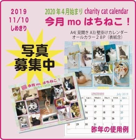 【番外】はち猫カレンダーの写真応募(募集)