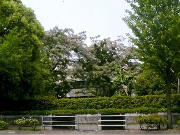 京都楽蜂庵日記