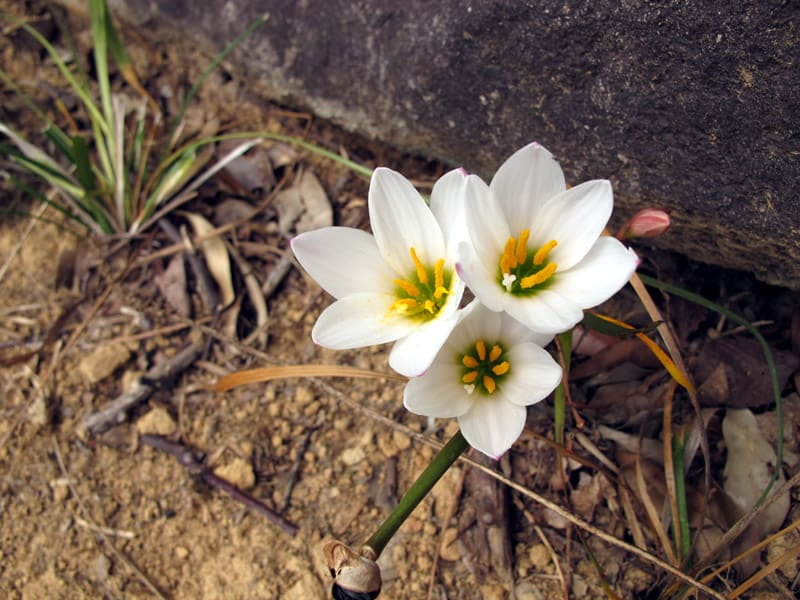 Whiteflowers_web