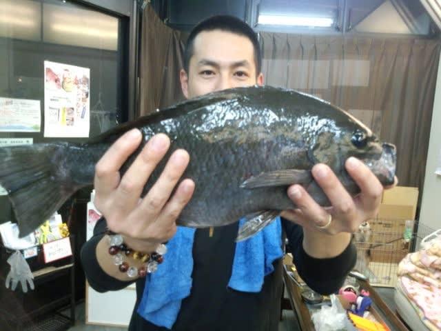 24225_gorota_miya