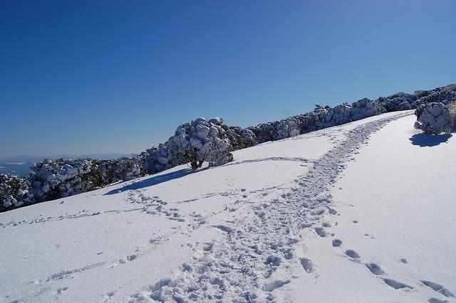 雪原のトレース