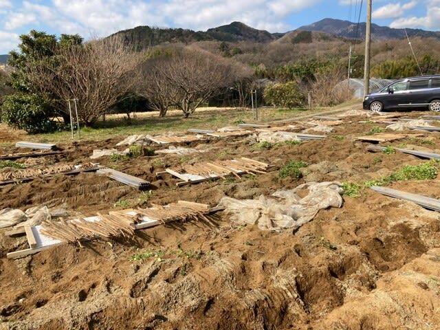 箱根 自然薯の森 山薬