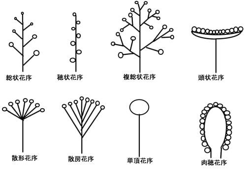 植物用語」のブログ記事一覧-ふ...