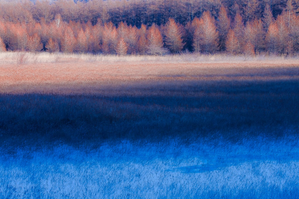 小田代原の霜降りの朝の写真